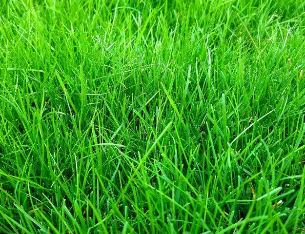 the best review of milorganite lawn fertilizer