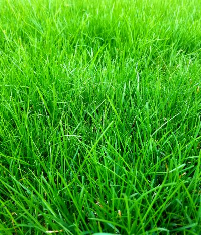 the best review of milorganite lawn fertilizer
