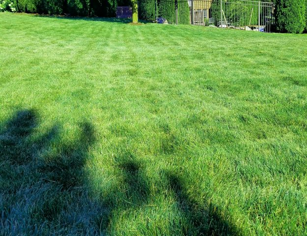 tips for the best way to mow your lawn
